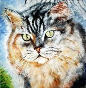 18) September 2012, Öl a. Lw., 50x50, Katze