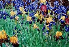 07)September,2021,Öl a.Lw.,80x120,3.Teil,Blumen sind das Lächeln der Erde